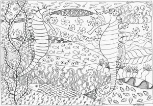 2015-034-Seepferdchen